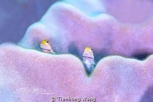 TUTTI by Tianhong Wang