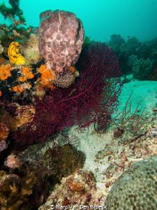 black coral by Marc Van Den Broeck