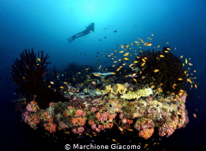 Dharavandhoo. Acquario Nikon D800E , 16mm , two sea and ... by Marchione Giacomo