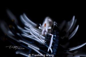 NIGHT WARRIOR by Tianhong Wang