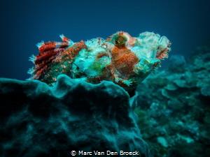 colored Scorpio by Marc Van Den Broeck