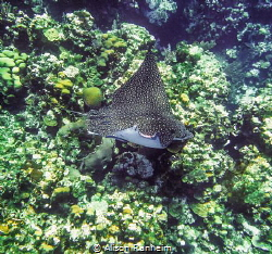 Sharkbite? by Alison Ranheim