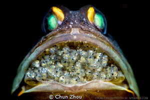 A jaw fish with hundred new life in its mouth. I spent 4 ... by Chun Zhou