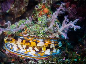 Shell colors by Marc Van Den Broeck