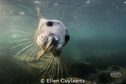 Flying in