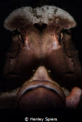 Grumpy Rhinophia by Henley Spiers