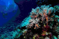 Had great trip on Hurrican in the Red Sea,last month - th... by Malcolm Nimmo