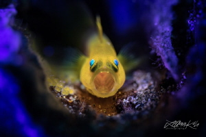 S C R E A M E R