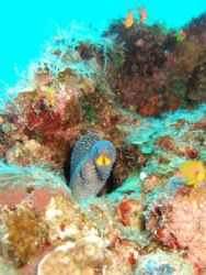 Taken at The Canyon Dive Site, Dahab on a single reef out... by Jeff Allen