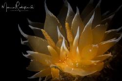 Glow in the dark by Mario Robillard