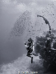 Dream Dive by Henley Spiers