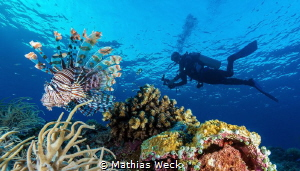 Lion Fish with diver at Tubbataha reef by Mathias Weck