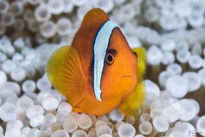 Nemo by Kelvin H.y. Tan