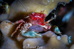 Ceramic Crab eggs & fan by Khaled Zaki