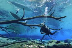 One of North Florida's hidden gems. by Griff Gainnie