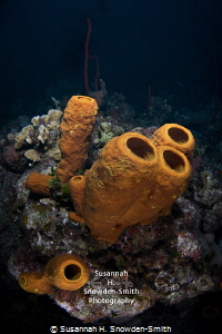 """Sponges In 3-D"" Sponges pop off the screen.  Double exp... by Susannah H. Snowden-Smith"
