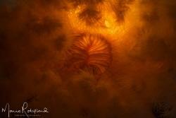 Underwater Sunrise by Mario Robillard