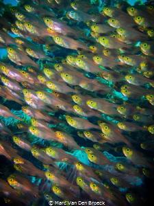 fish eyes by Marc Van Den Broeck