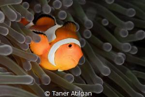Orange vs. green by Taner Atilgan