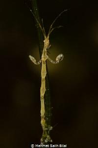 Pole dancer. by Mehmet Salih Bilal