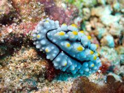 Taken at Sipadan Island, East Malaysia by Dennis Siau
