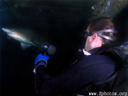 My dive buddy, Zach and I were fortunate to watch this Sa... by Zaid Fadul