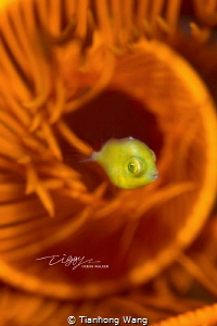 SWIRL