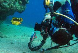 Nikki taking a shot of sriped butterflyfish. Sharksbay Sh... by Anel Van Veelen