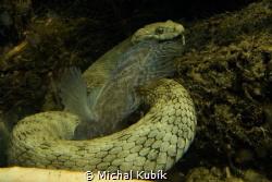 Hungry snake :-) by Michal Kubík