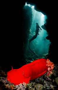 """""""Spanish freediver"""", Dahab, Red sea. by Filip Staes"""
