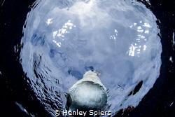 Bird from Below by Henley Spiers