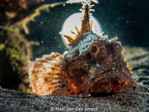 moonfish by Marc Van Den Broeck