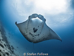 Brave New World