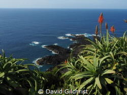 A lovely view of the ocean from the coast of the Azores, ... by David Gilchrist