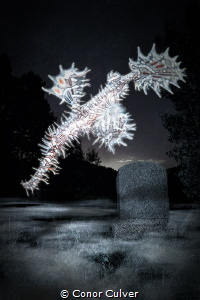 """""""Ghost Pipe Cemetery"""" part of my Underwater Surrealism bo... by Conor Culver"""