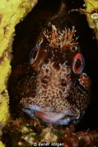 Red eyes & little teeth by Taner Atilgan