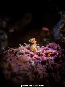 where is the nudi (2mm) by Marc Van Den Broeck