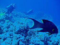 Red sea diving by Vanja Crljenica