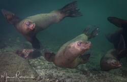 Sea puppies having fun around me by Mario Robillard