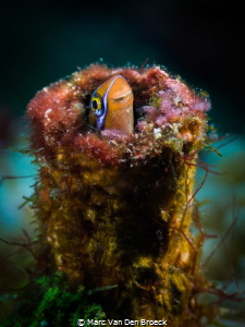 tupefish by Marc Van Den Broeck