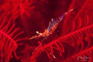 """Red"",Seraya, Bali. by Filip Staes"