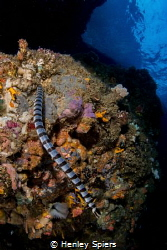 Sea Snake Sanctuary by Henley Spiers