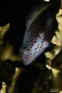 No Crop, Night Dive, With Flash by Ferhan Coskun