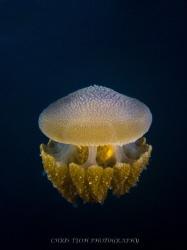 Underwater lantern by Christopher Teoh