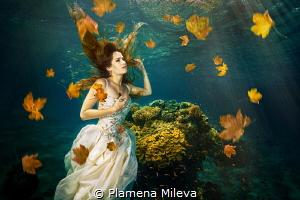 Apotheosis by Plamena Mileva