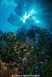 Deacon reef sunlight by Ludovic Galko-Rundgren