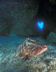 Grouper in the Tunnel of Love (Nikon F4, 18mm/3.5, Aquati... by Andrew Dawson