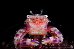 M A M A 