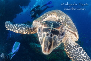 Turtle in the dome, Cozumel México by Alejandro Topete