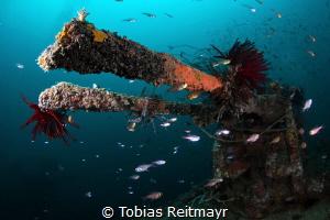 AA guns from the side, Gyoshin Maru, Tioman Island by Tobias Reitmayr
